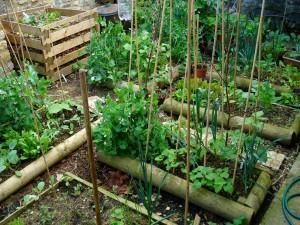 Horta em vasos ou jardineira