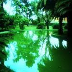Lagos de jardim – Porque construir um lago no jardim?