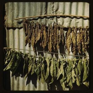 Venenos verdes - Fumo de Corda