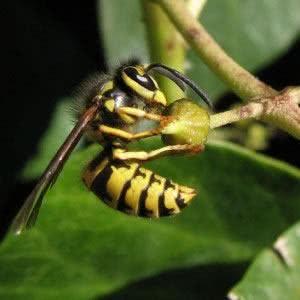 jardim equilibrio abelha