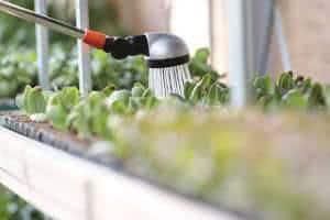 molhando canteiro plantas