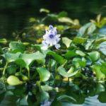 Plantas que Filtram a Água: Como Utilizá-las