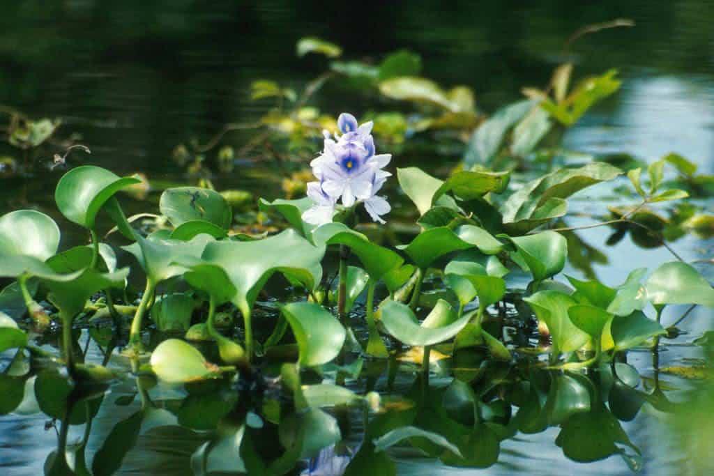 Plantas que filtram a gua como utiliz las - Condizionatore perde acqua dentro casa ...