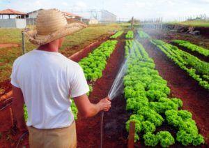 Vantagens da Reciclagem da Água para a Horta