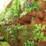 Plantas em Placas de Coco, Madeira e Troncos: Como Plantar?