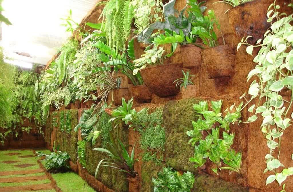Plantas de bambu para exteriores affordable imagen titulada grow bamboo step with plantas de - Bambu planta exterior ...