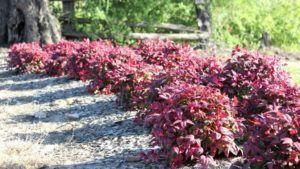 Plantas para Maciços no Jardim