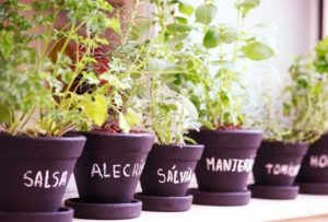 Plante Ervas e Temperos Dentro de Casa