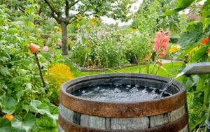 Quando aproveitar a agua da chuva para sua horta ou jardim.