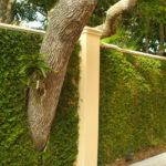Trepadeiras para Muros e Grades mais verde no jardim