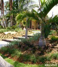 jardim caminhos - canteiro forma organica