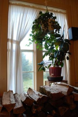 Plantas de interior: sugestões!