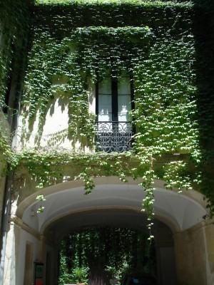 Trepadeiras para Muros e Grades aumentando o verde no jardim