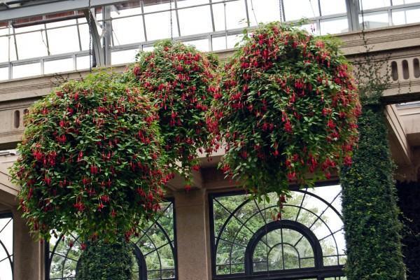 Trepadeiras para Muros - Ficus pumila
