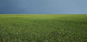 Gramados e a grama