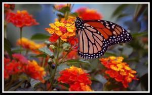 Plantas que atraem beija-flores e borboletas