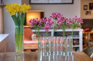 Espaços para Orquídeas em casa