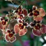 Orquídeas: recipientes, vasos e substratos!