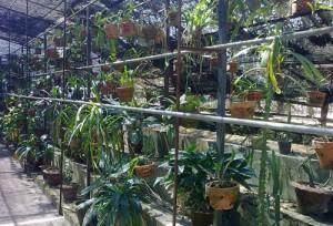 orquidea estufas