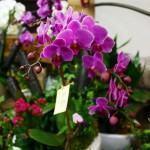 Projeto de orquidário – veja como fazer o seu!