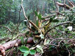 Orquidea em mata