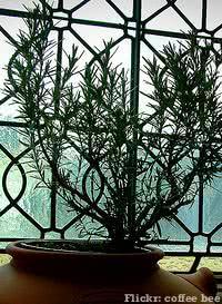 vaso janela vitral