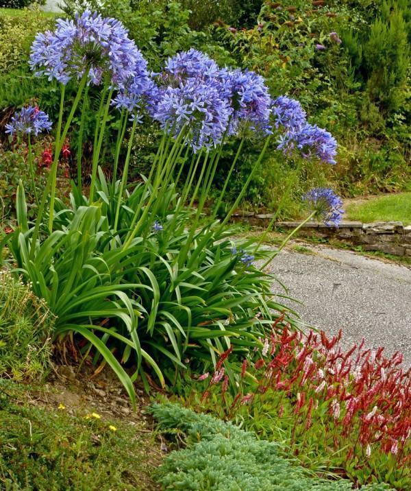 Plantas para maci?os no jardim - FazF?cil