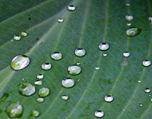 Reciclagem da agua na horta! Vantagens no re-uso das águas