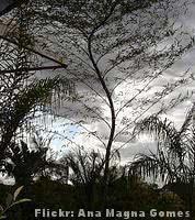 bambu-mosso-paisagem-peq