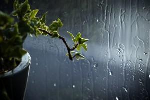 Agua da chuva aproveitada para a sua horta ou jardim.