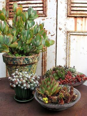 Como cuidar das plantas em vasos dicas plantas de for Cuidar hierbabuena en interior