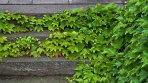 Como plantar sua forração! Preparação dos canteiros …
