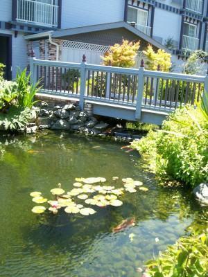 ponte do jardim