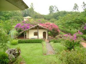 Flores herbáceas primavera/verão para embelezar seu jardim!