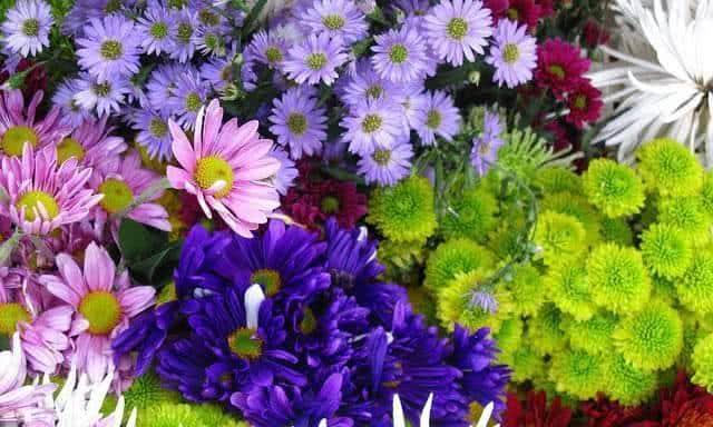 flores jardim primavera : flores jardim primavera:Preparando o jardim para florir na primavera! – FazFácil