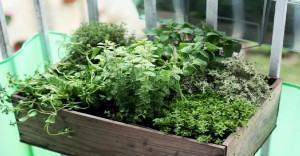 Plantas Medicinais: Metodos de Preparo caseiro.