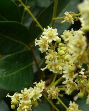 Plantas Medicinais Aromáticas