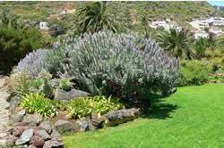 Projeto do jardim - plantas