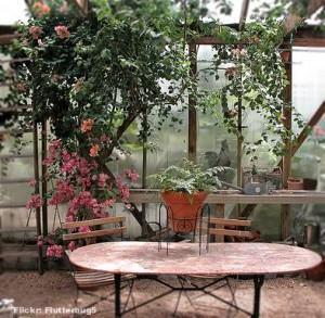 Jardim de inverno - bougainville