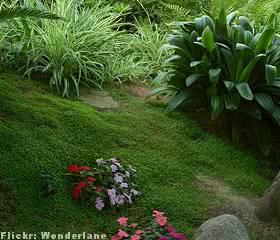 jardim-umido