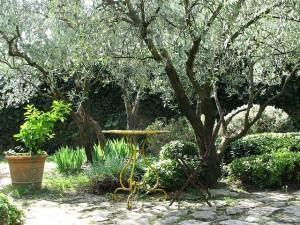 Jardim em equilíbrio, como  planejar o seu jardim!