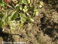 Coberturas de Solo - mulch-grama