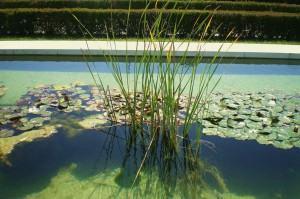 Plantas que filtram a água – como devem ser utilizadas!