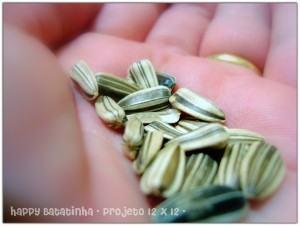 Cultivo do Girassol sementes