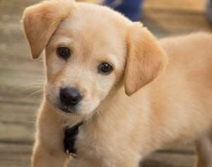 Filhote de cachorro – os cuidados básicos necessários!