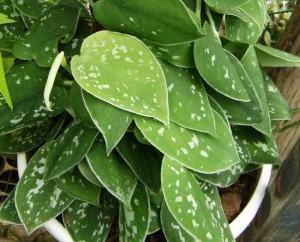Plantas de Interior que purificam o Ar do Ambiente!