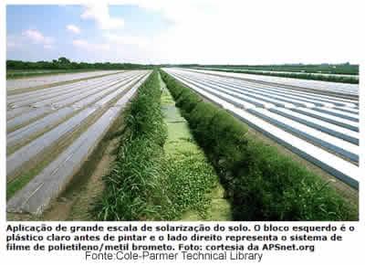 Solarização do solo