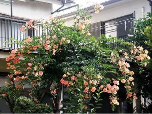 Jardim de Verão – como planejar um belo e agradável espaço!