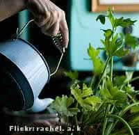 Como cuidar de plantas em vasos