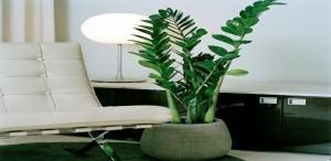 Toque decorativo na sala de jantar plantas de interior - Vitaminas para plantas de interior ...